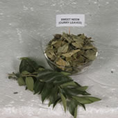 DEHYDRATE SWEET NEEM (CURRY LEAVES)